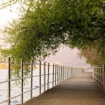 Floating Bridge with tree
